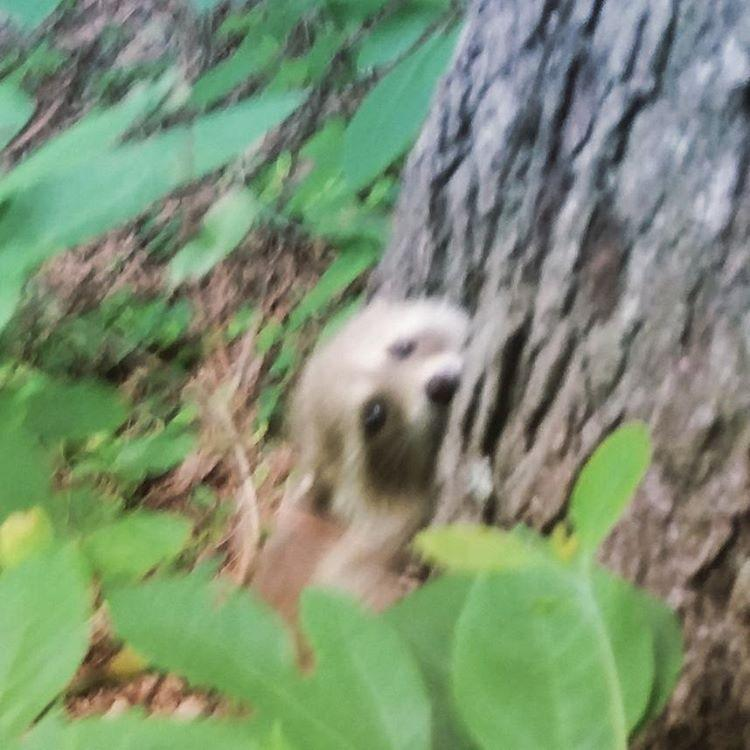 Baby in the woods #huntingtoninsta #raccoon #aww #cute #huntingtonwv #rotarypark