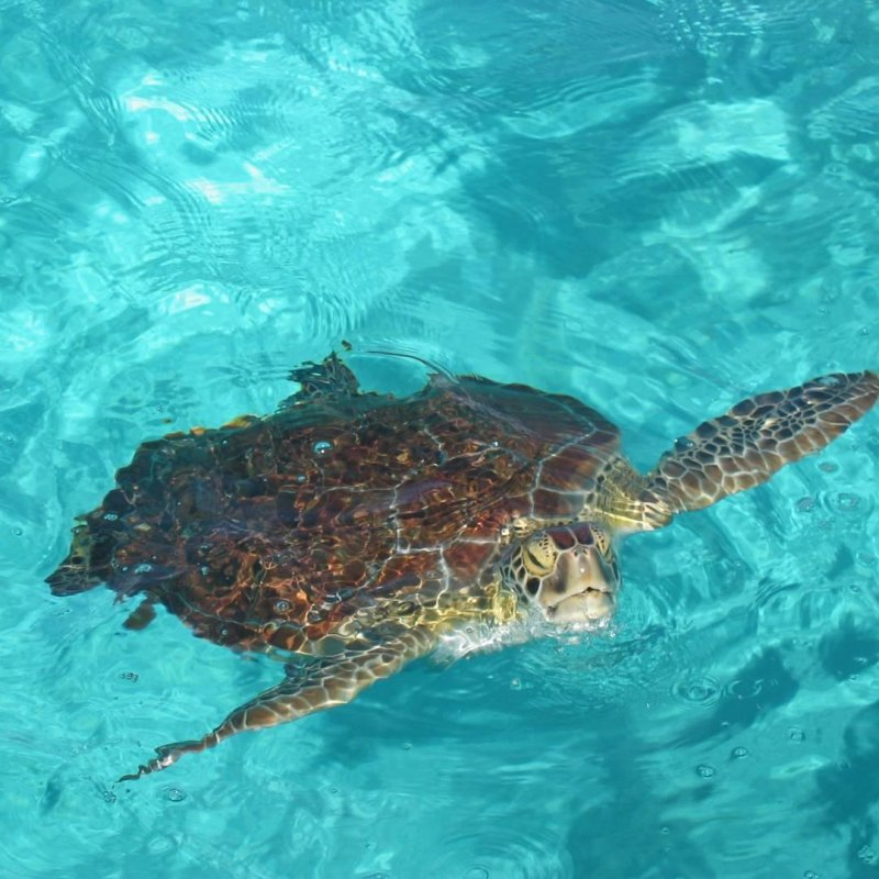 Thinking of warm weather #nofilter #turtle