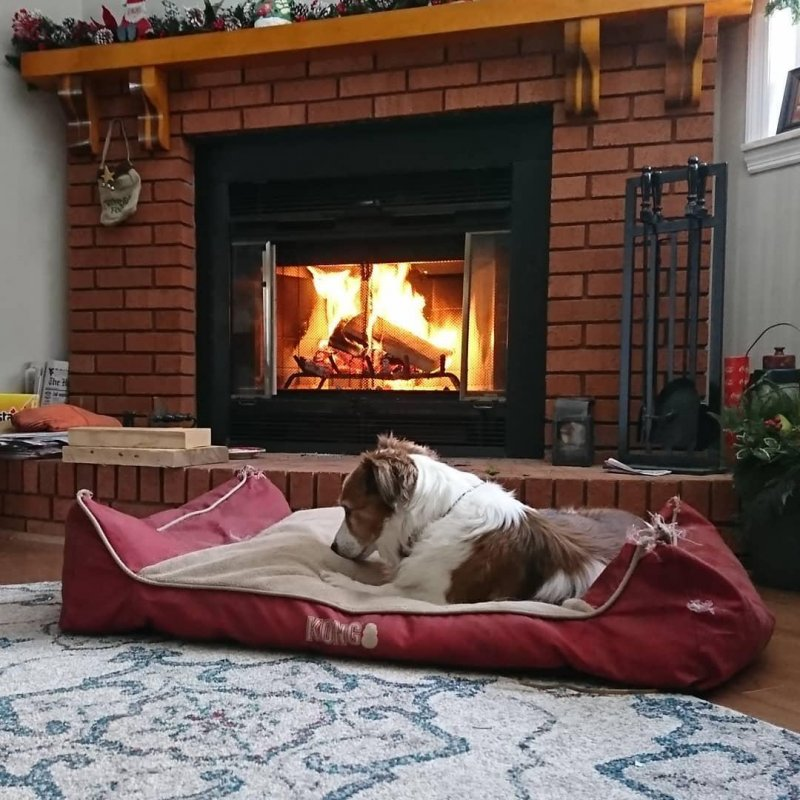 Old bones by the fire