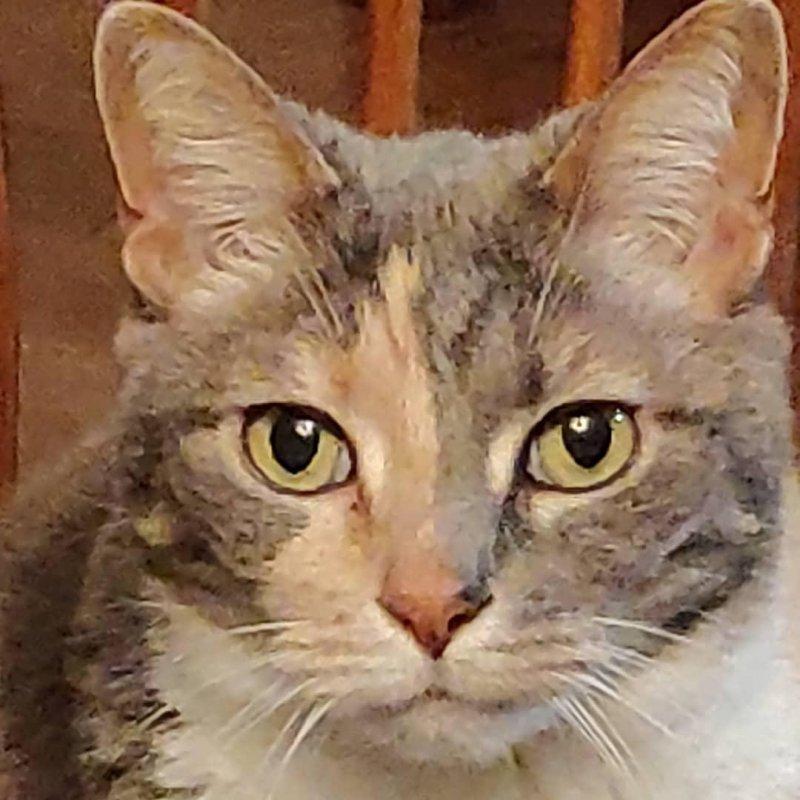 Piglet the cat  #catsofinstagram