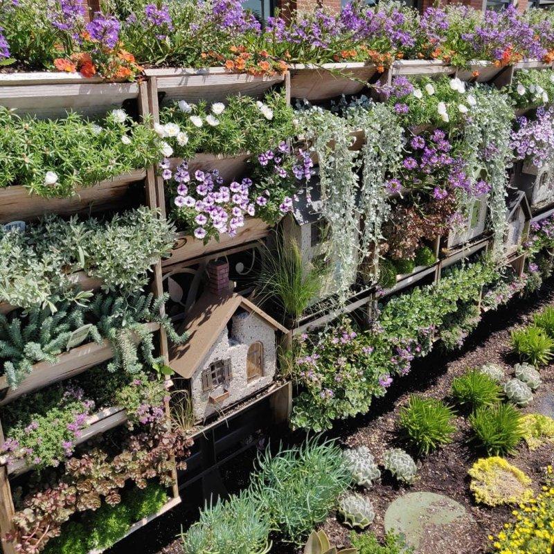 Near garden #garden#herbs