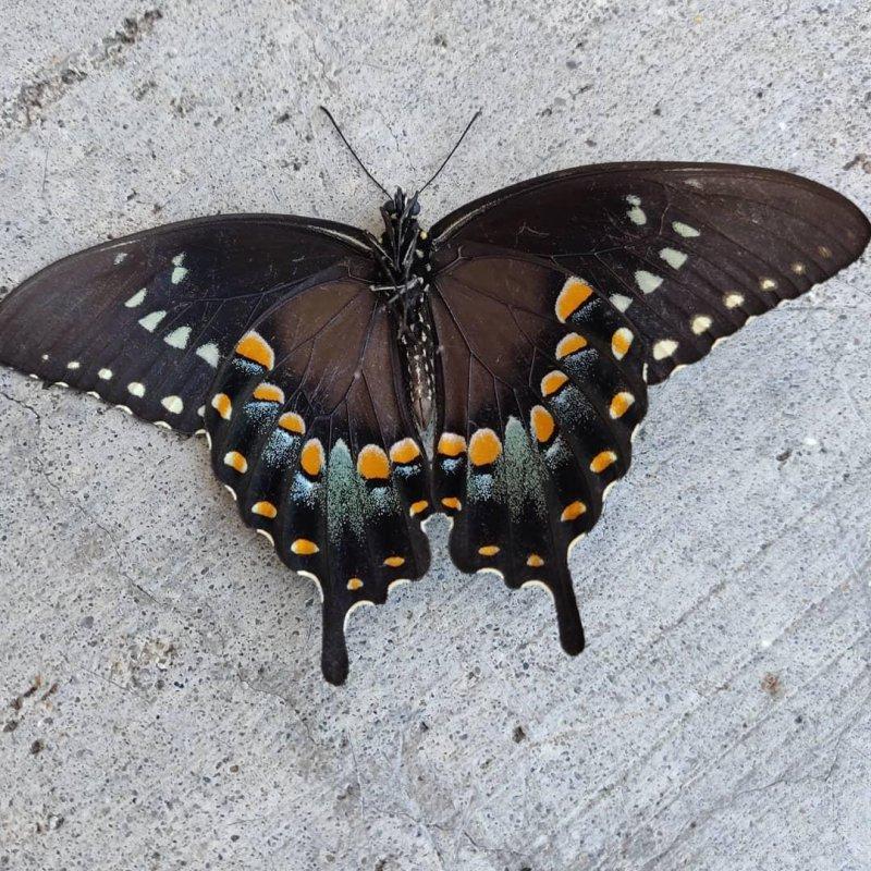 Beautiful death #butterfly